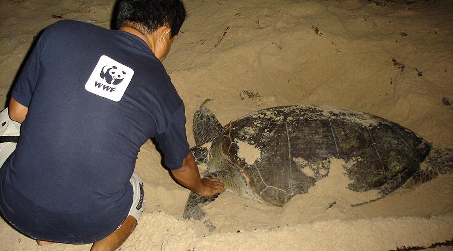 Con Dao schildpadden