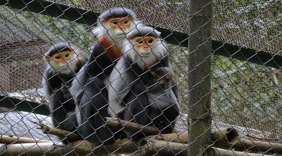 Endangered Primate Rescue Center