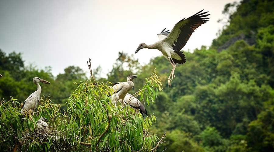Thung Nham Bird Garden