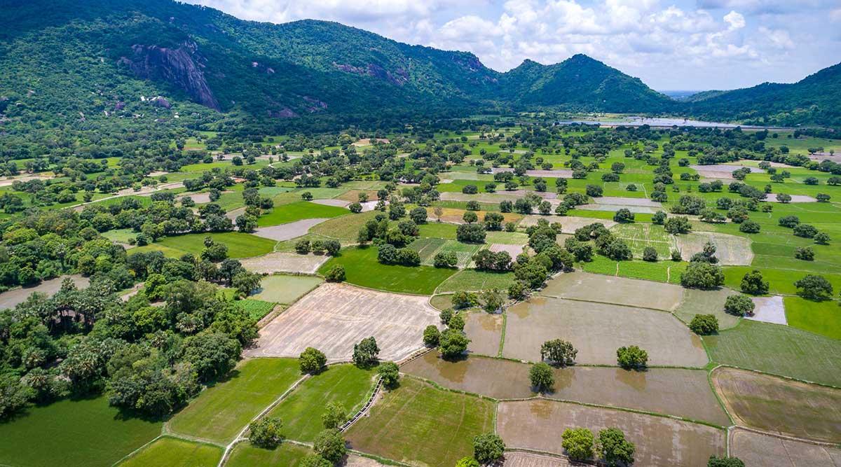 An Giang Mekong Delta rijstvelden