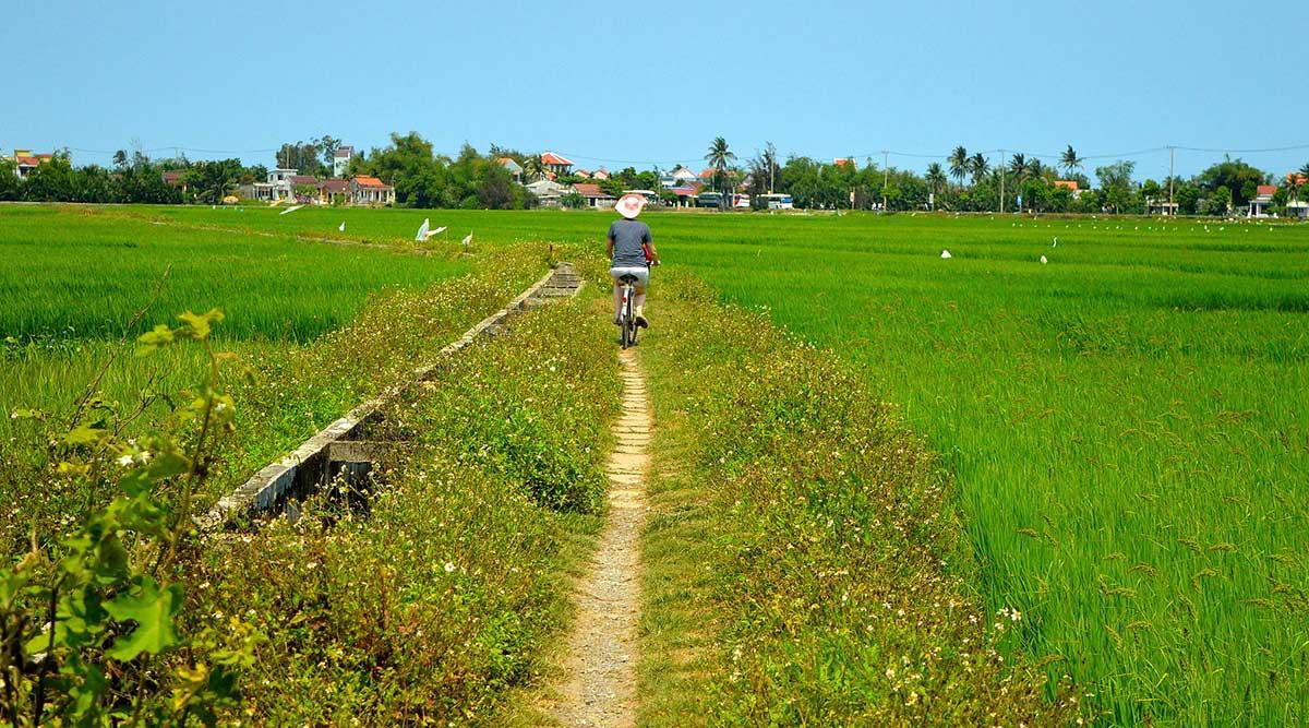 Hoi An rijstvelden