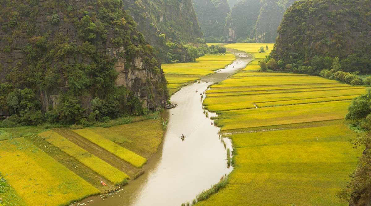 Ninh Binh rijstvelden