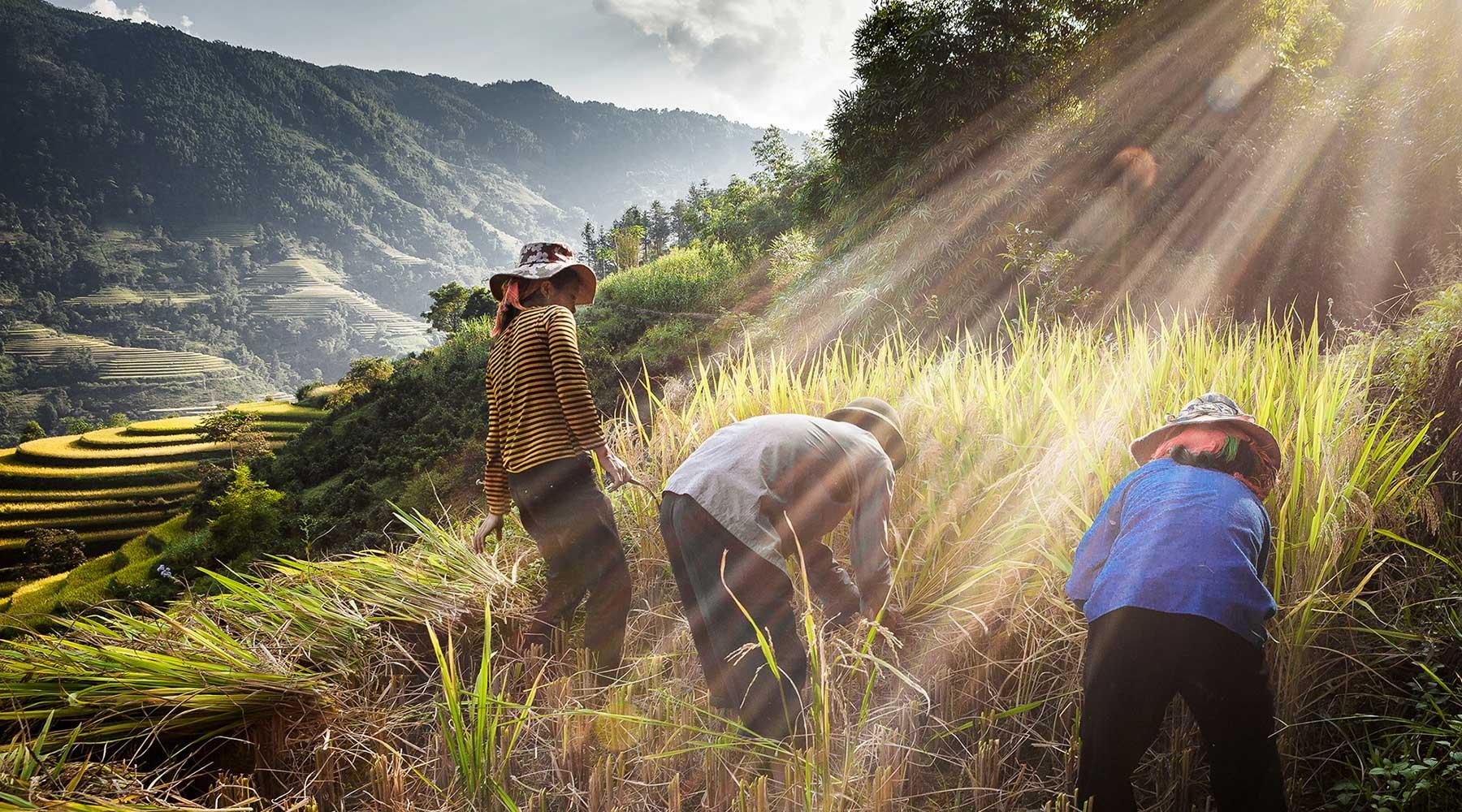 Top 10 mooiste rijstvelden in Vietnam