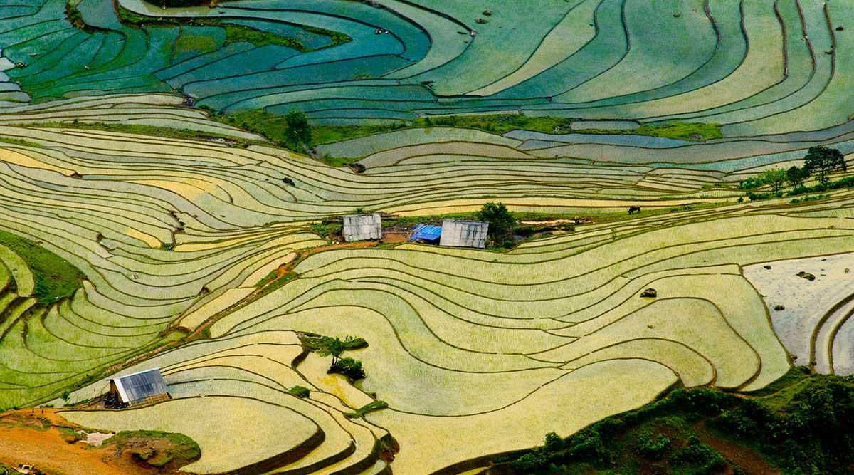 Vietnam beste seizoen voor rijstvelden