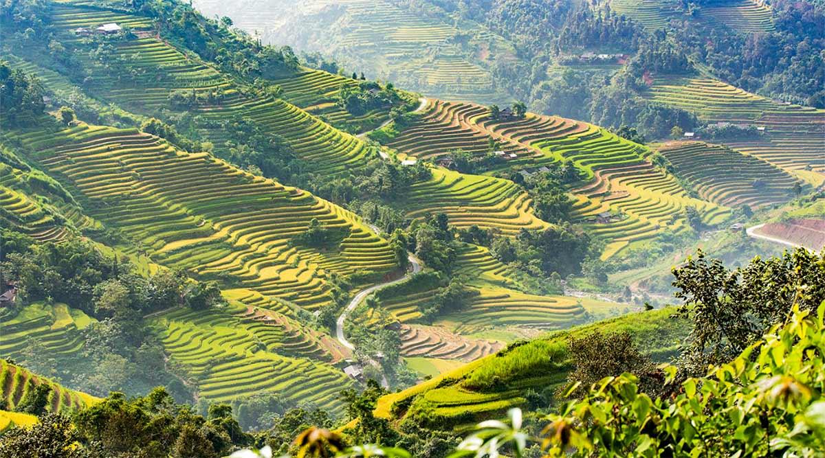 Ban Luoc rijstvelden