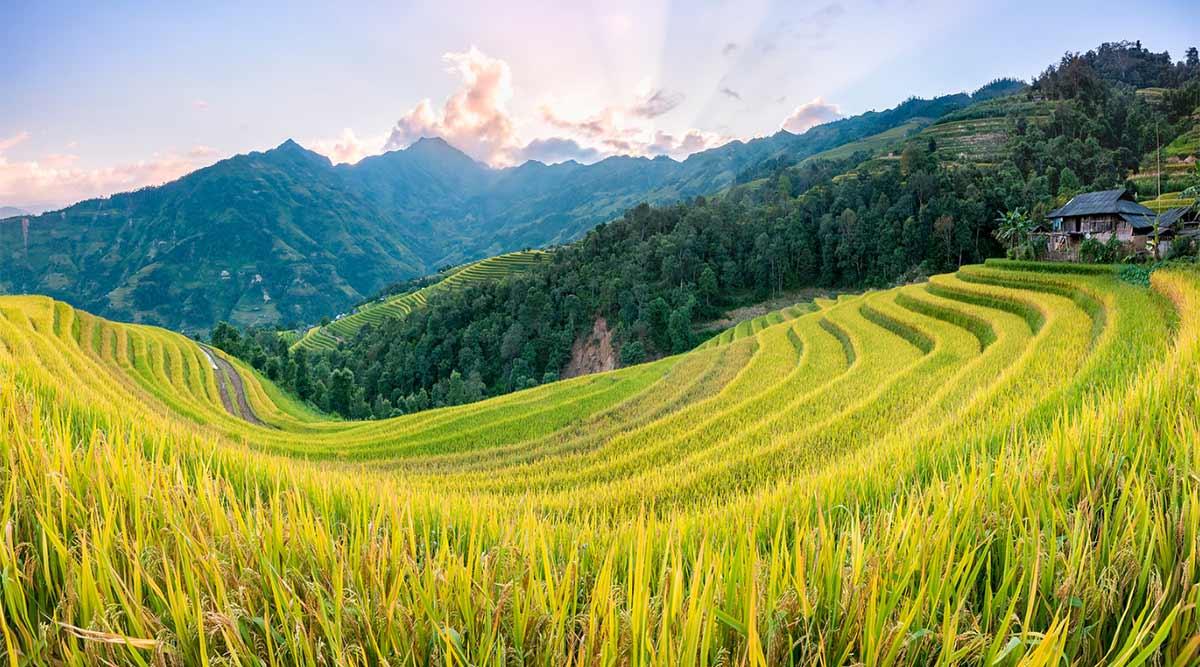 Ban Phuong