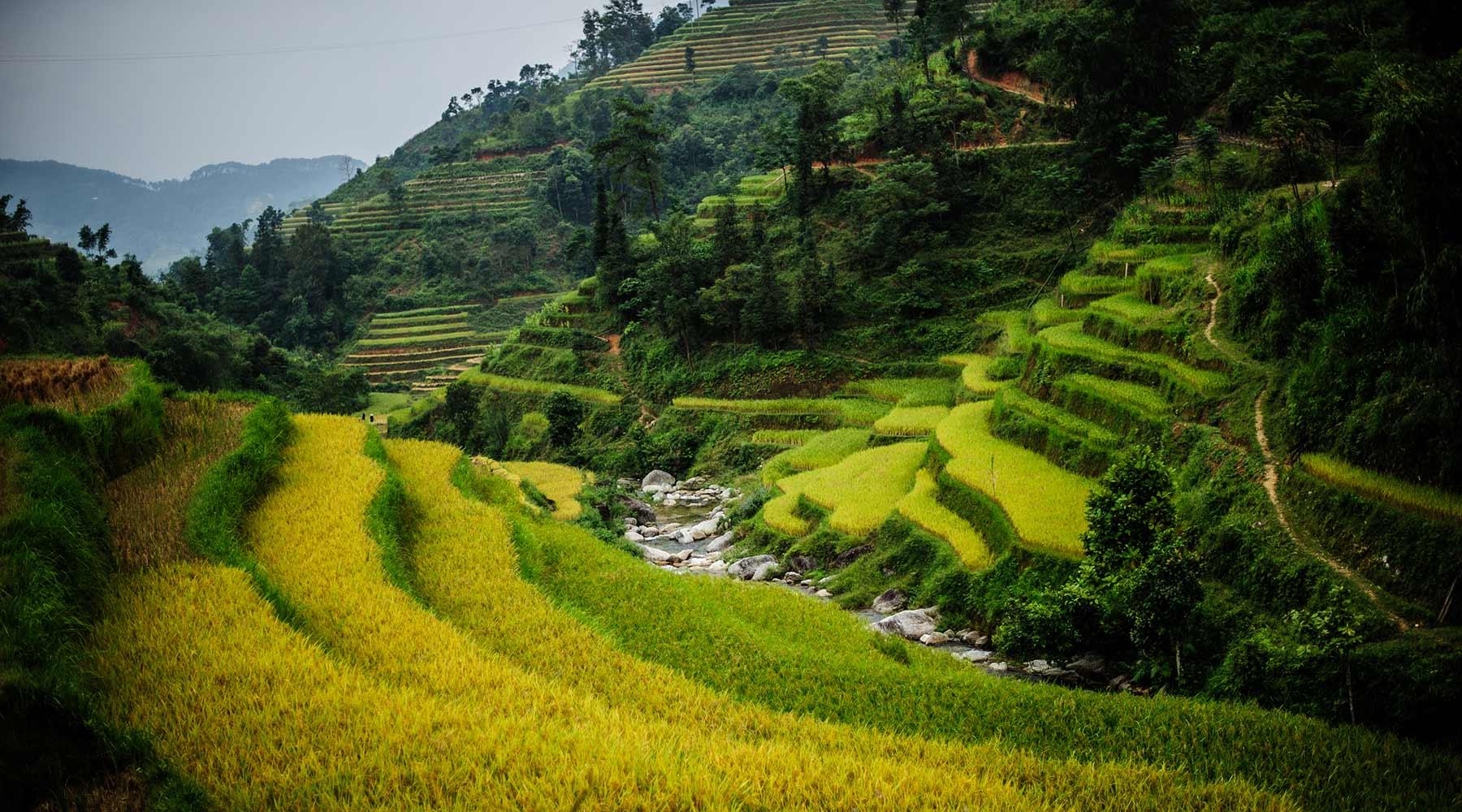 De rijstterrassen van Hoang Su Phi in Ha Giang