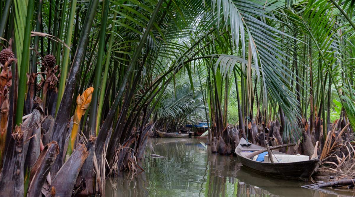 Bay May Coconut Forest kokosnoten bos in Hoi An
