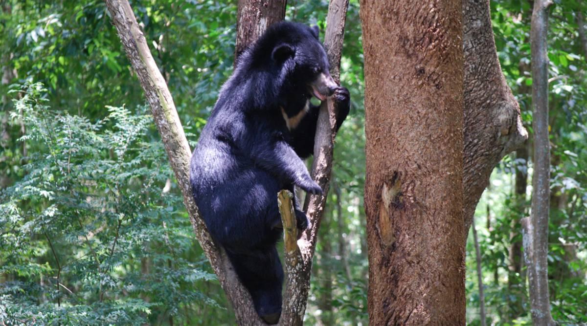 beren in Cat Tien National Park