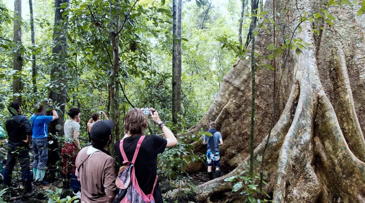 grote bomen in Cat Tien National Park