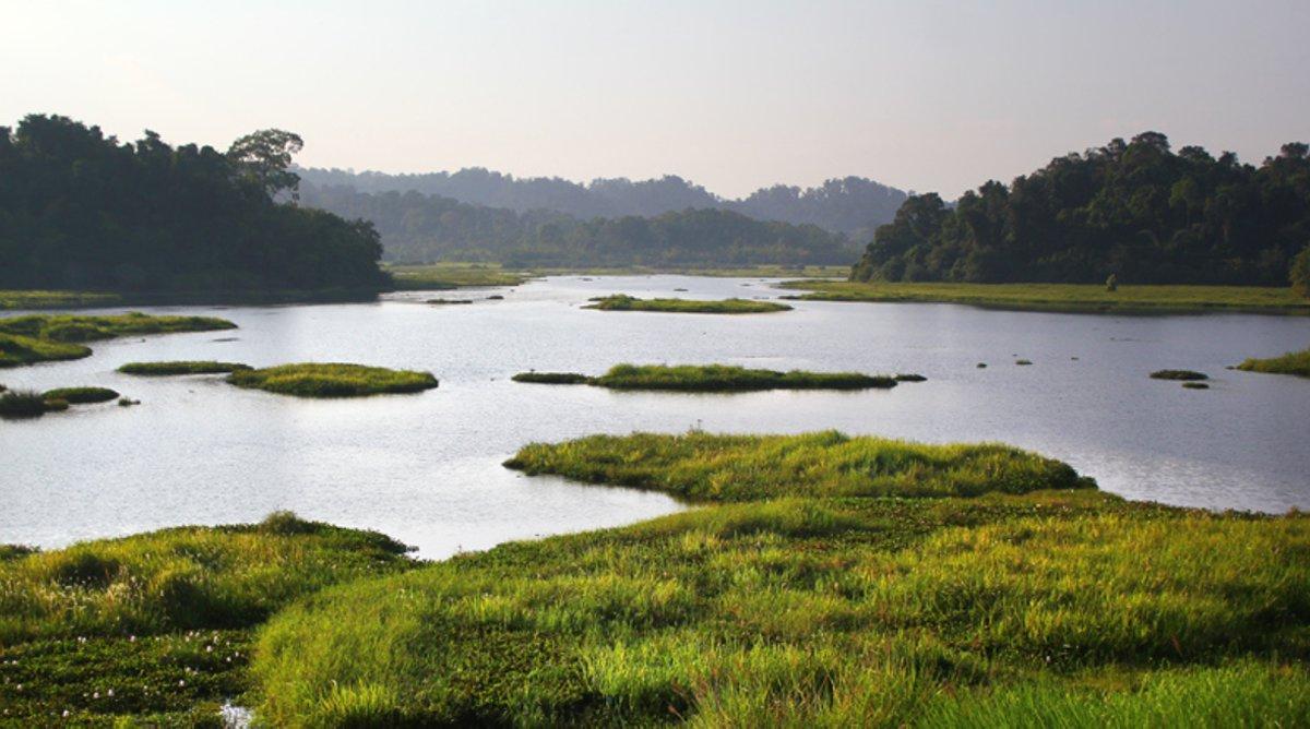 krokodillenmeer in Cat Tien
