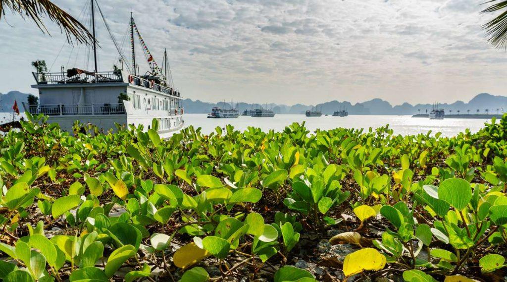 Tuan Chau cruise haven van Halong Bay
