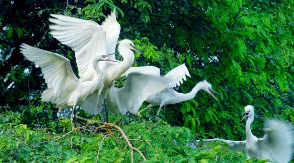 Vam Ho vogelreservaat in Ben Tre