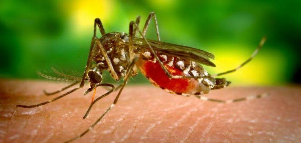Malaria in Vietnam