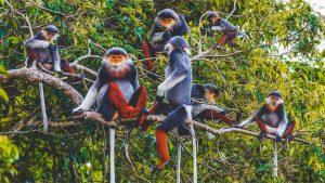 Cuc Phuong nationaal park