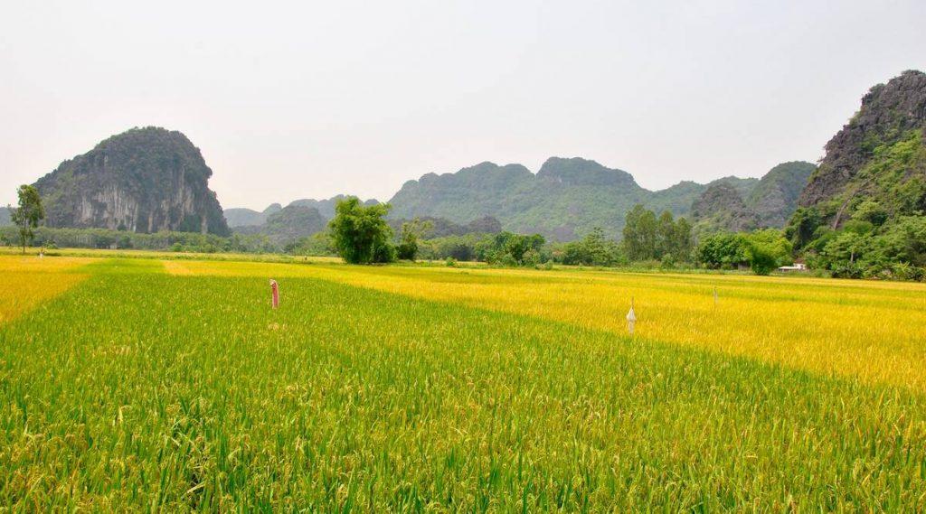 platteland in Ninh Binh