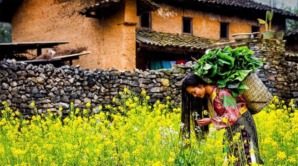 Ha Giang bloemen