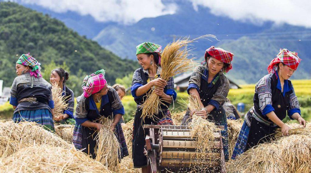 Hmong bergstammen in Mu Cang Chai