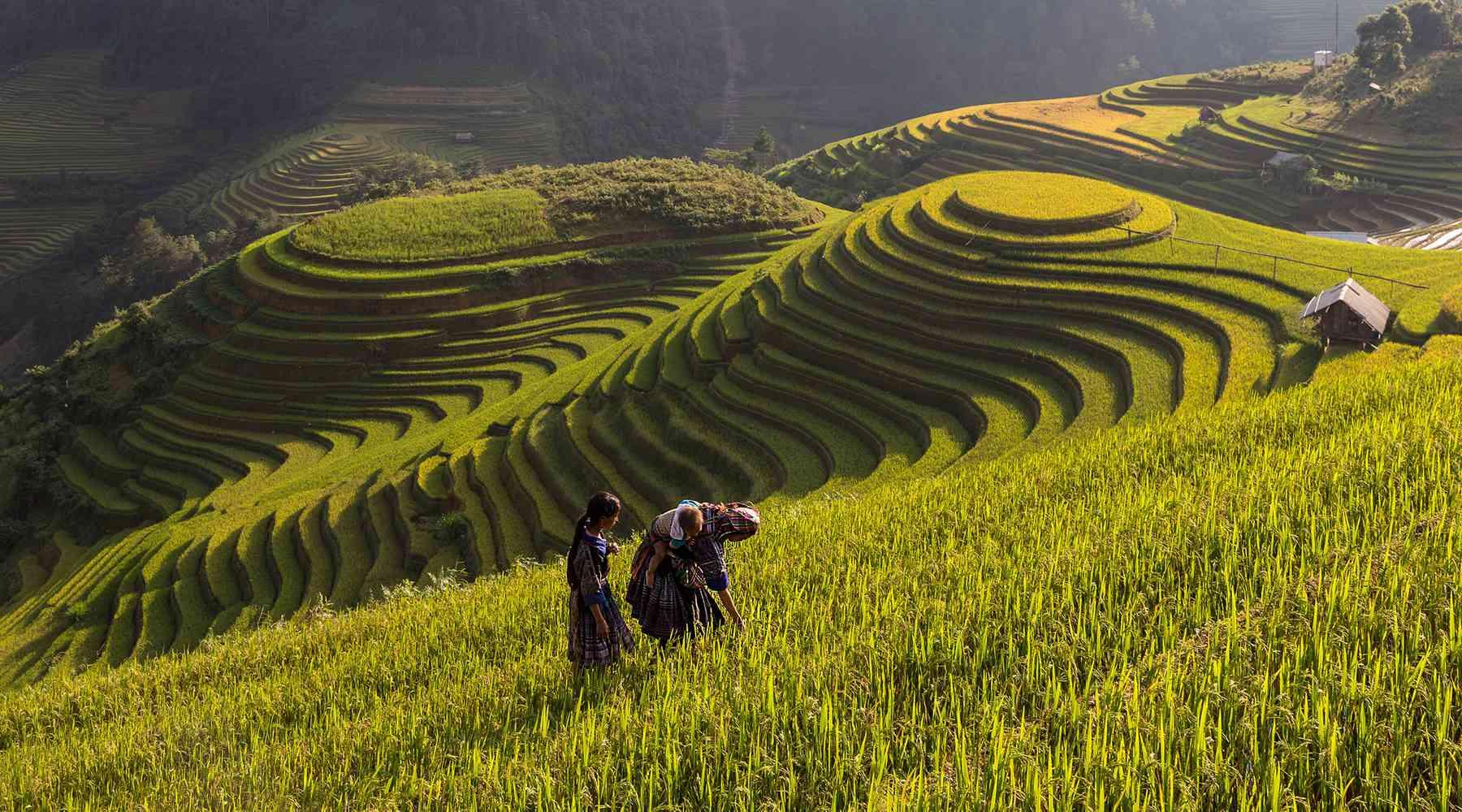 hoogtepunten in Vietnam