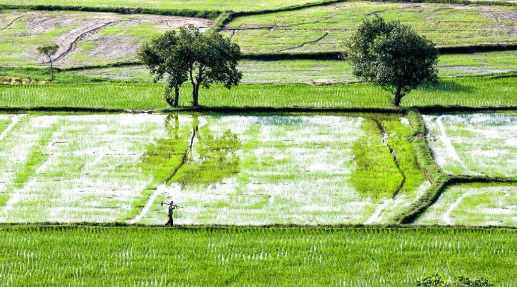 Ta Pa rijstvelden