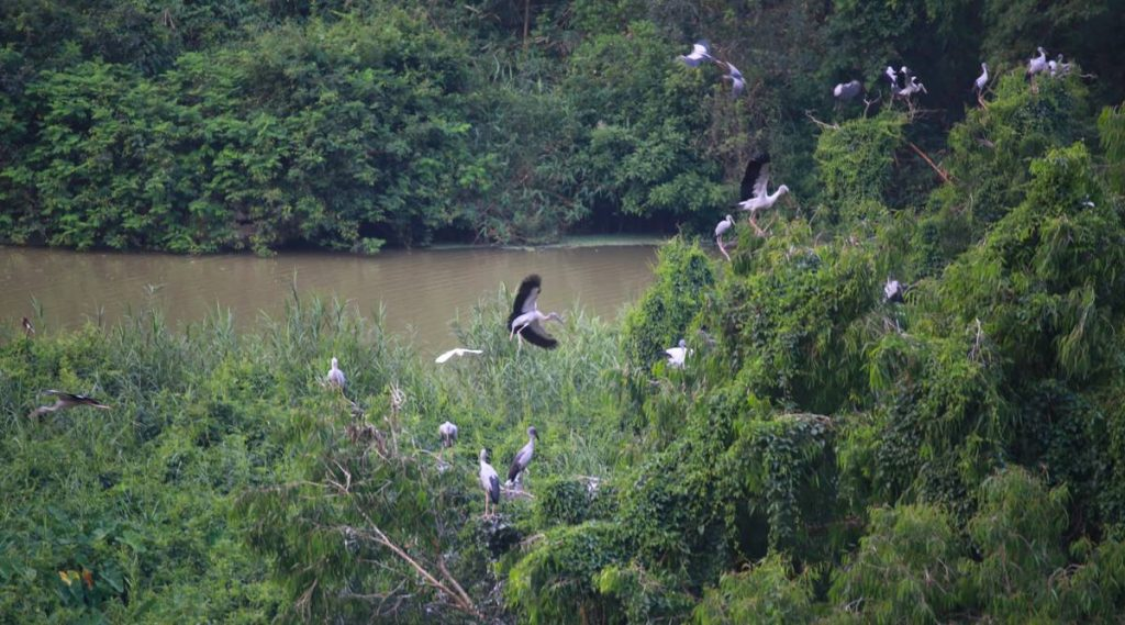 Thung Nham park beste tijd om vogels te spotten