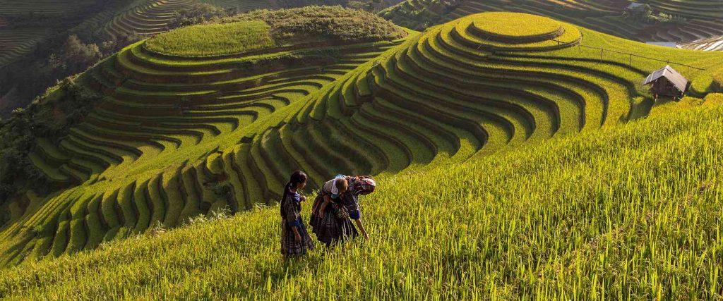 Vietnam reis op maat