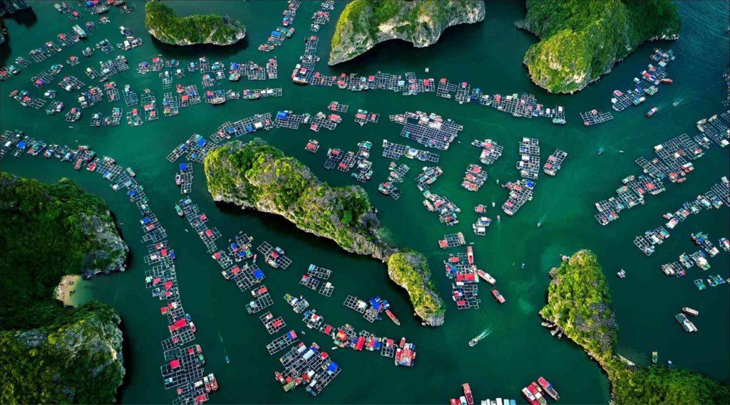 Halong Bay, Bai Tu Long Bay of Lan Ha Bay