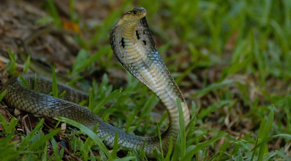 Dong Tam slangenboerderij