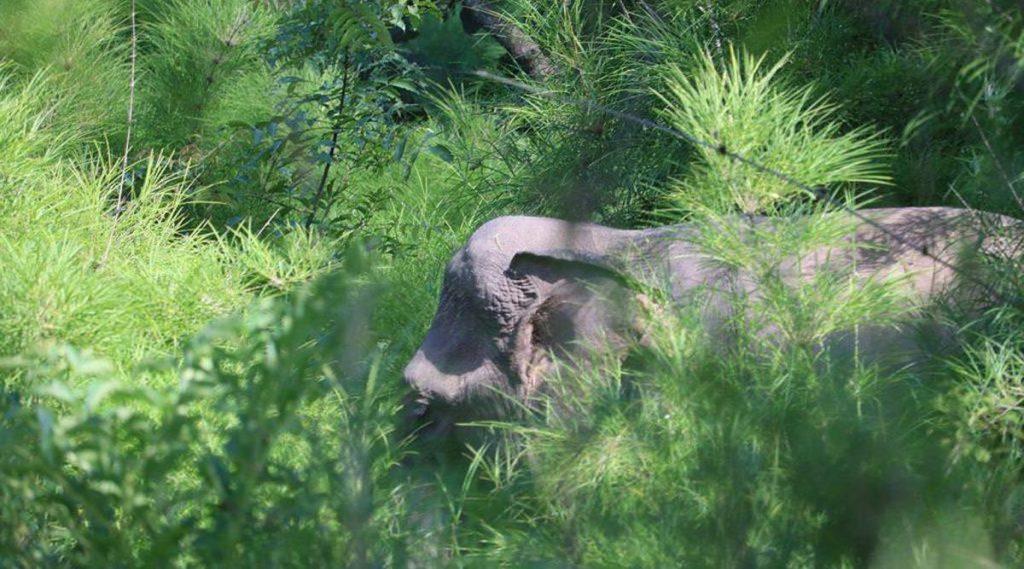 olifanten in Yok Don nationaal park