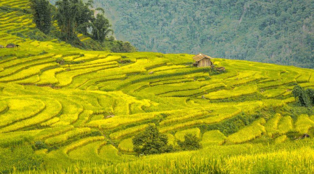 Y Ty rijstvelden