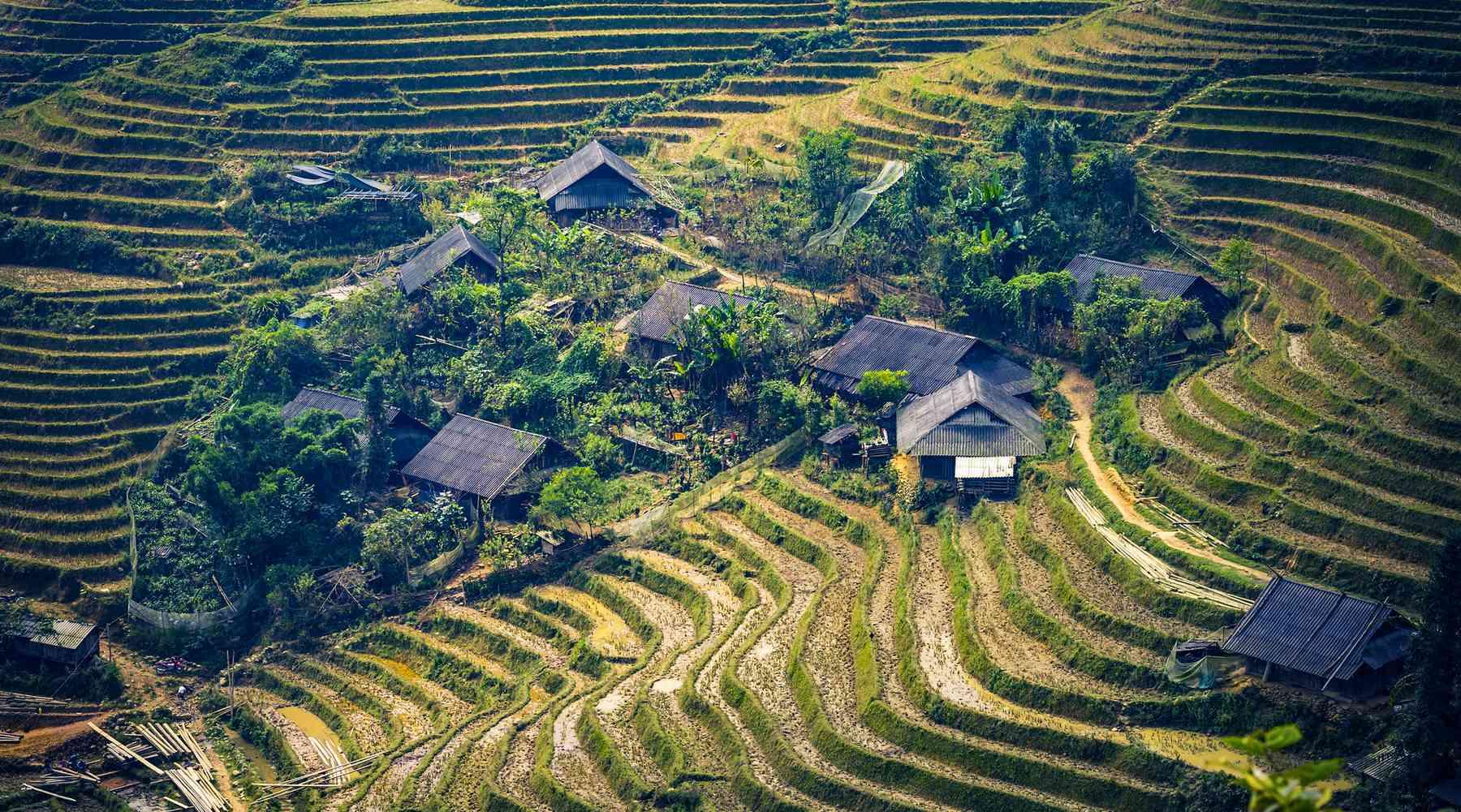 rijstvelden in Sapa