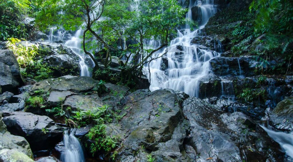 Botanische tuinen Phong Nha