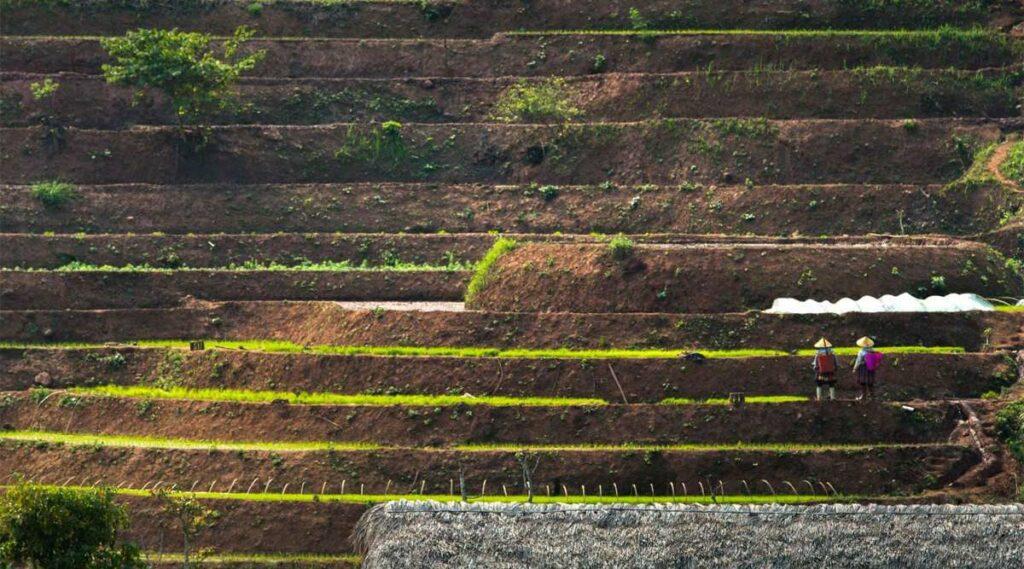 Mai Chau terrasvormige rijstvelden