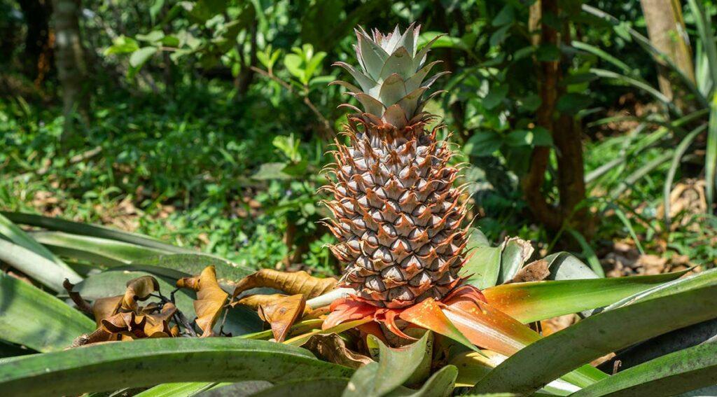 fruit Mekong Delta