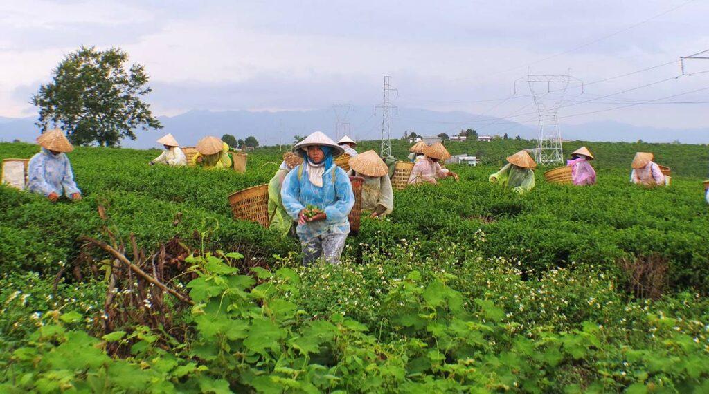 koffieplantage Dalat